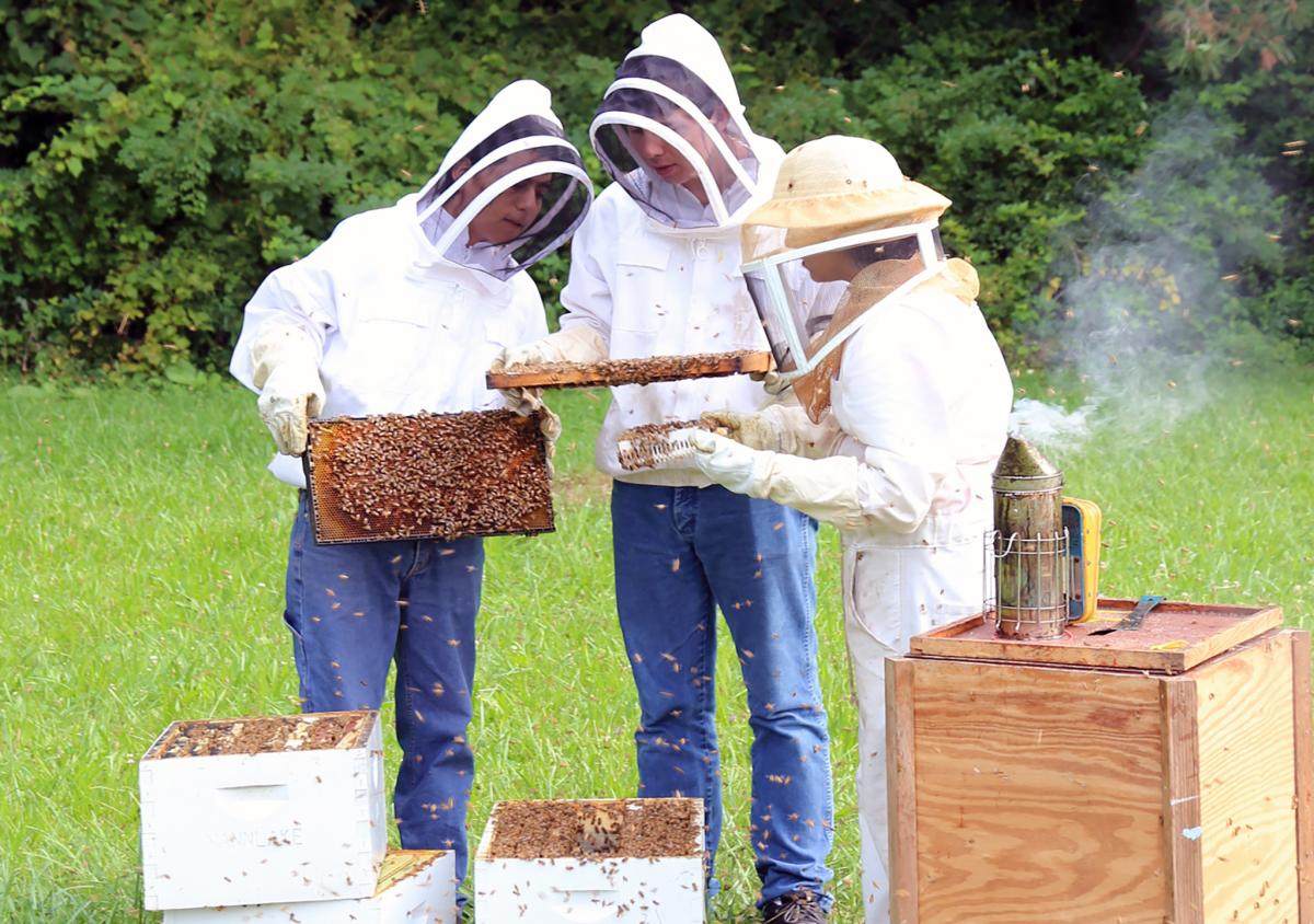 Rothenbuhler Honey Bee Lab