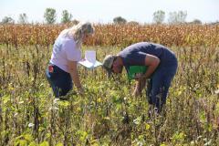 Examining the Crops